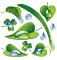 Water drops with a leafs vector image