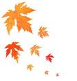 Watercolor painted orange leaves fall vector image