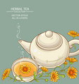 calendula tea background vector image
