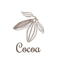 Cocoa beans sketch vector image