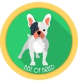 dog best of breed medal icon flat design vector image
