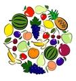 Fruits circle vector image