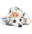portrait of a dog vector image vector image