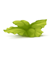 Bush Plant with Large Leaves vector image