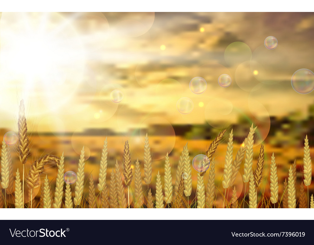Background on rice crop flowers vector