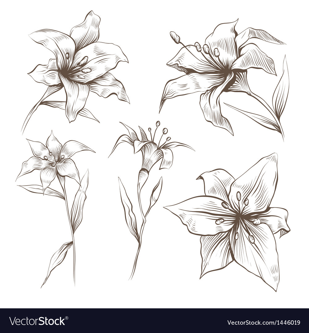 Hand drawn lilly flower set vector