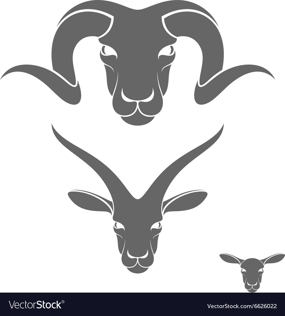 Ram sheep goat vector