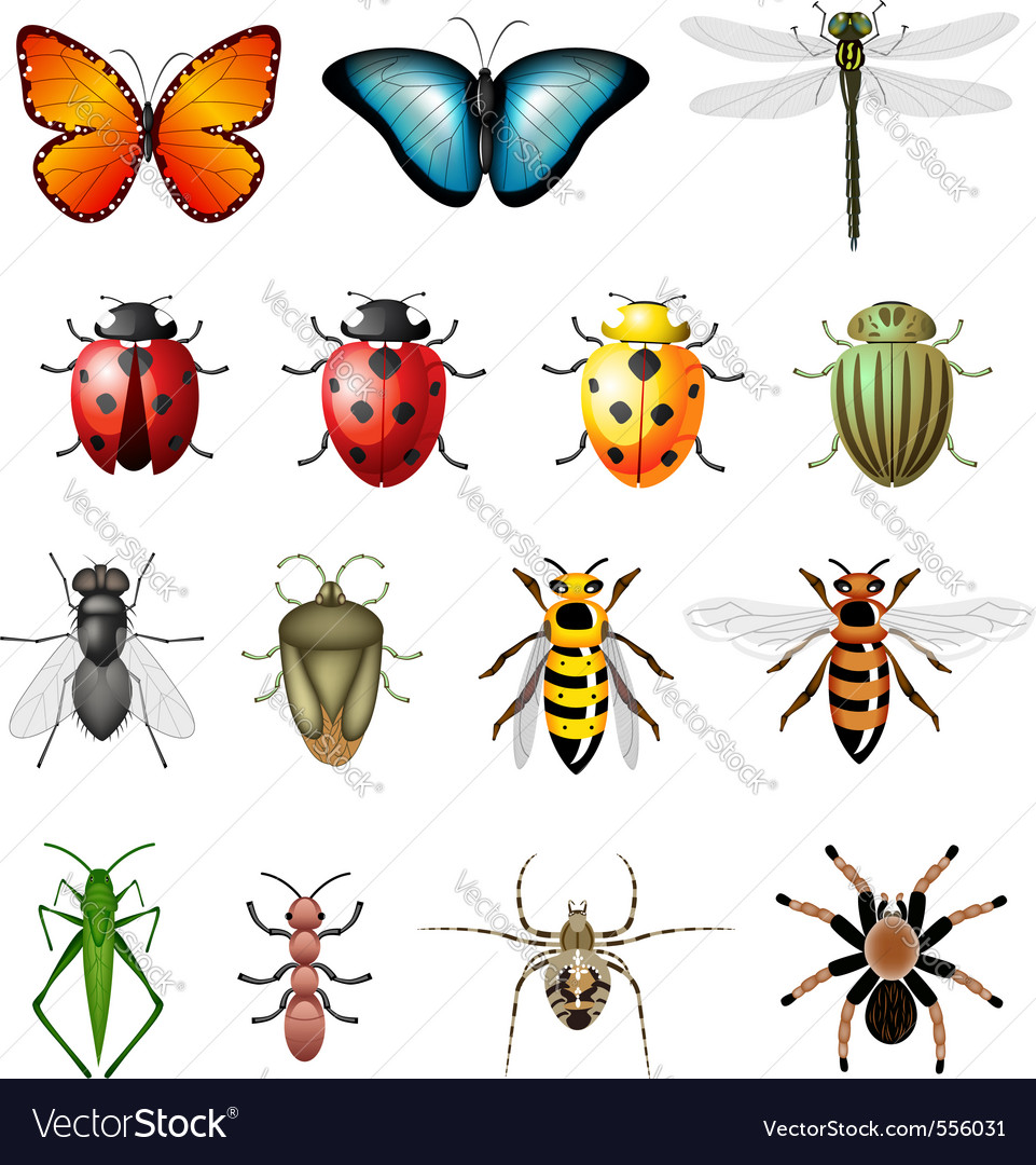 Insects bugs vector