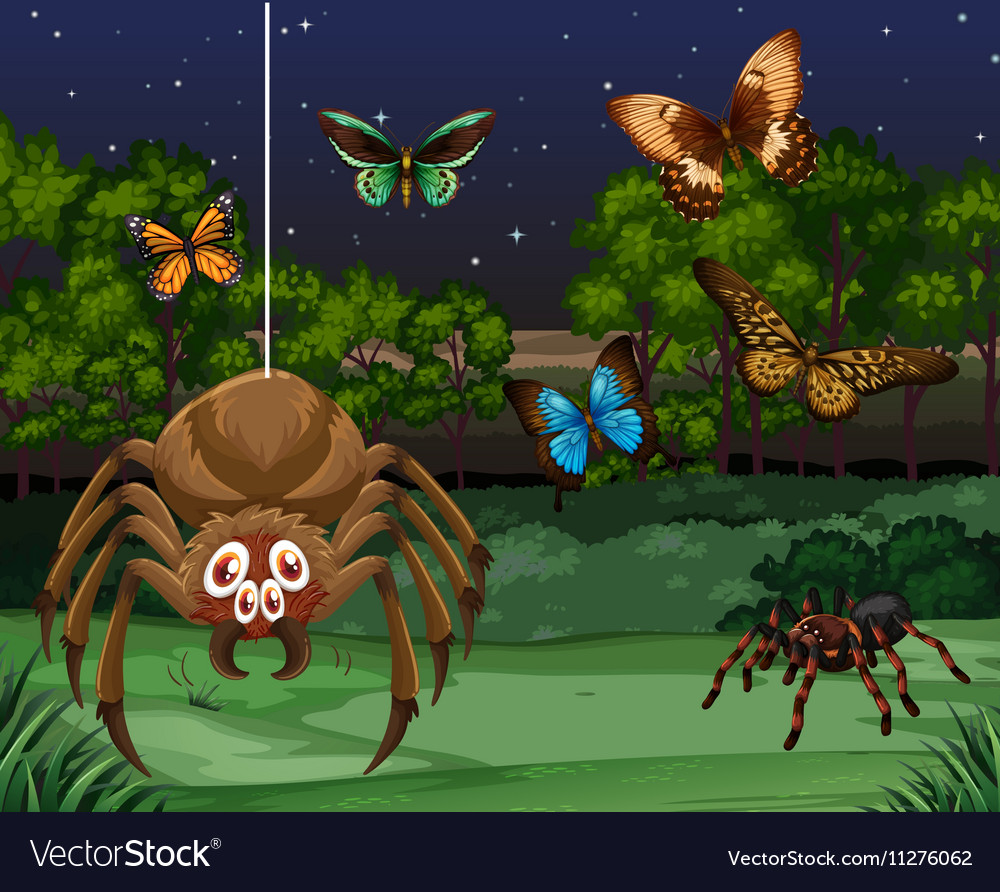 Butterflies and spider at night vector
