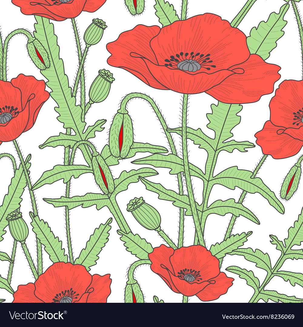 Elegant floral seamless pattern with poppy flowers vector