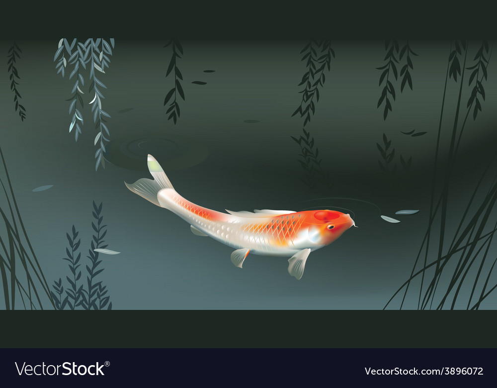 Koi carp in pond vector