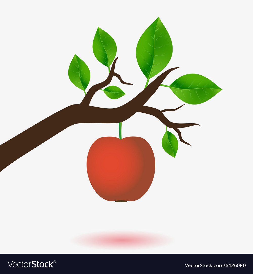 Red apple and branch of tree with green leaves vector