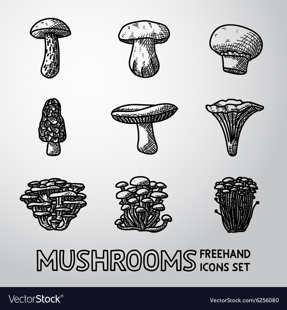 Set of freehand mushrooms icons  porcini vector