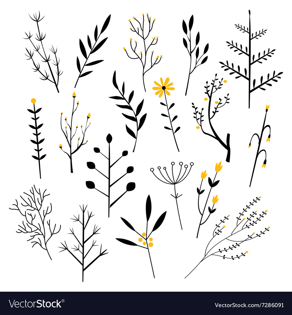 Plants flowers and branches vector