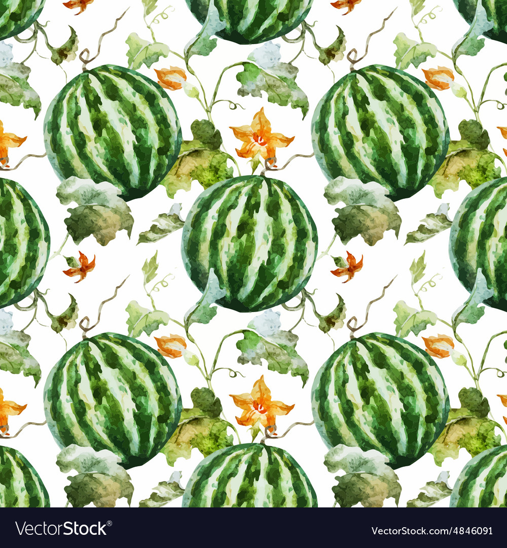 Watercolor watermelon melon pattern vector