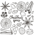 Collection of Christmas spices and citrus vector image