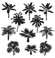 Tropical plants silhouette set vector image