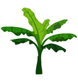 banana tree cartoon for you design vector image