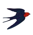 Happy swallow with high details vector image