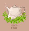 melissa tea vector image