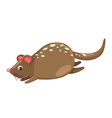 Quoll isolated on white background vector image