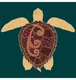 Caretta-caretta turtle with high details vector image