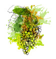 Colored hand sketch grapes vector image