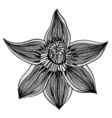 sketch of flower lily vector image