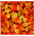 seamless autumn leaves pattern vector image vector image