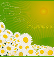summer chamomile flowers in field vector image