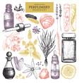 vintage perfumery and cosmetics set vector image