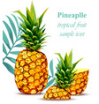 pineapple fruit tropical style card vector image