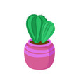 potted cactus home plant in a pink flowerpot vector image