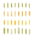 Set of simple and stylish Wheat vector image