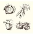 Vegetable set sketch autumn vector image