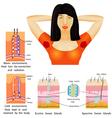 Armpit sweat vector image