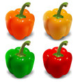 Bell pepper vector image