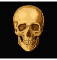 gold skull vector image