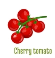 Cherry tomato vegetable icon vector image