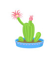 cactus with pink flowers home plant in a vector image
