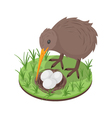 3d isometric of kiwi bird near the nest vector image