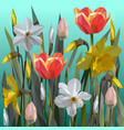 daffodil and tulips flowers isolated vector image
