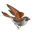Little bird cub sparrow passer domesticus in flig vector image