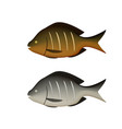 boiled and fried fish on white in 3d vector image