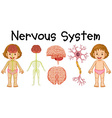 Nervous system of little girl vector image