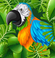Parrot with colorful feather vector image
