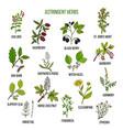 astringent herbs hand drawn set of medicinal vector image