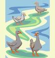waterfowl birds vector image