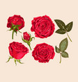 set of red rose vector image