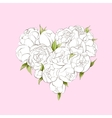 White peonies heart vector image vector image